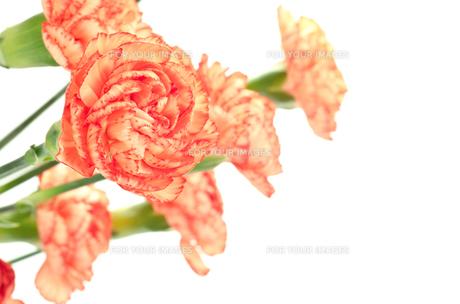 オレンジ色のカーネーションの花束の素材 [FYI00096394]