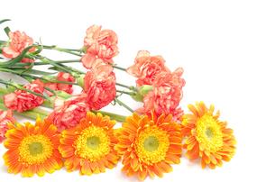 オレンジ色のガーベラとカーネーションの花束の素材 [FYI00096413]