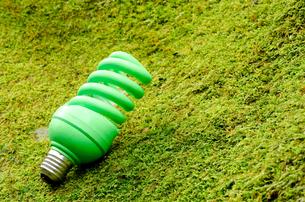 コケの上の緑の電球の写真素材 [FYI00096422]