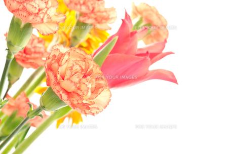 カーネーションとチューリップの花束の素材 [FYI00096434]