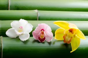 竹をバックに3色のシンビジウムの花の写真素材 [FYI00096457]