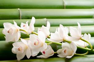竹をバックに白いシンビジウムの花の写真素材 [FYI00096459]