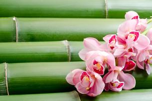 竹をバックに紫のシンビジウムの花の写真素材 [FYI00096465]
