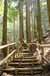 杉林の中の山道の写真素材 [FYI00096466]