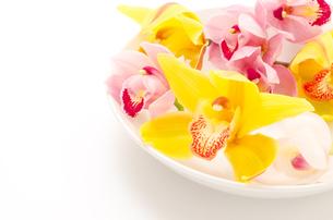 皿の上の三色のシンビジウムの花の写真素材 [FYI00096468]