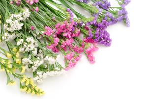 ハナハマサジ(リモニウム)の花束の写真素材 [FYI00096491]