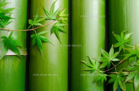 並べた竹とカエデの葉の素材 [FYI00096497]