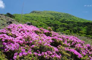 霧島の韓国岳とミヤマキリシマの花の素材 [FYI00096555]