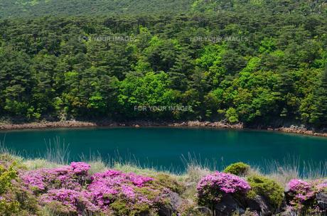 霧島の不動池とミヤマキリシマの花の素材 [FYI00096566]