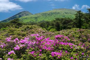 霧島の韓国岳とミヤマキリシマの花の素材 [FYI00096569]