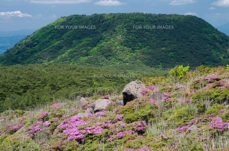 霧島の甑岳とミヤマキリシマの花の素材 [FYI00096610]