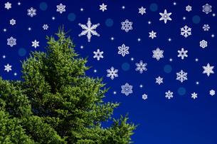 モミの木と雪の結晶のイメージの写真素材 [FYI00096726]