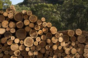森の前に積み上げられた丸太の写真素材 [FYI00096823]