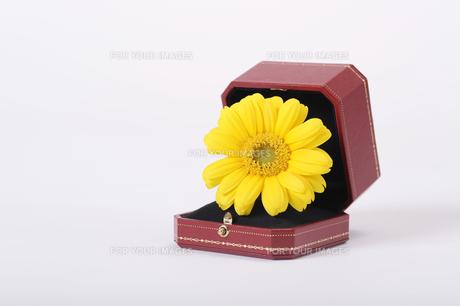 宝石箱に花の素材 [FYI00097828]