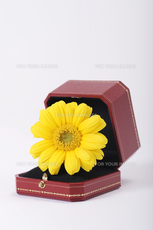 宝石箱に花の素材 [FYI00097838]
