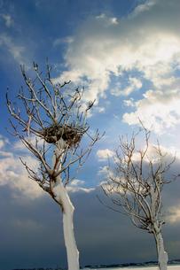 厳冬のはさ木の写真素材 [FYI00098133]