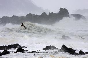 冬の海の写真素材 [FYI00098183]