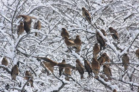 冬の鳶の写真素材 [FYI00098185]