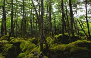 雨に濡れた苔の森の写真素材 [FYI00098201]