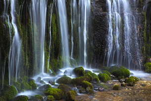 雪解け 白糸の滝の写真素材 [FYI00098213]