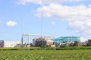草サッカーの写真素材 [FYI00098440]