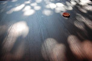 木漏れ日の素材 [FYI00098591]
