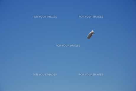 飛行船の写真素材 [FYI00098659]