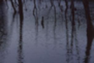 海上の森 大正池の素材 [FYI00098735]