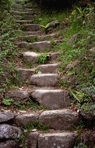 里山の石段の写真素材 [FYI00098814]