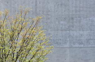 壁と植栽の写真素材 [FYI00098892]