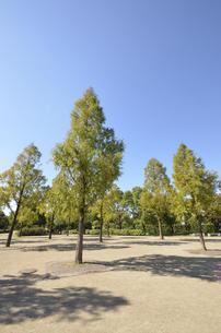 広場の木立の写真素材 [FYI00098903]