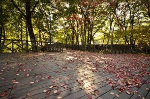 秋色のウッドデッキの写真素材 [FYI00099005]