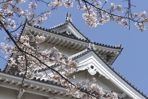 長浜城(歴史博物館)の写真素材 [FYI00099057]