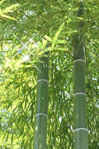 竹林の写真素材 [FYI00099297]