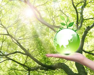 エコロジーの写真素材 [FYI00099645]