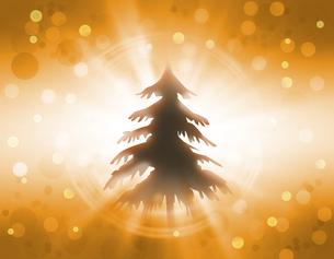 逆光の立ち木の写真素材 [FYI00099780]