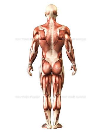 人体イメージの写真素材 [FYI00099987]