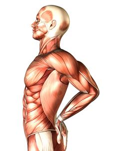 人体イメージの写真素材 [FYI00099990]