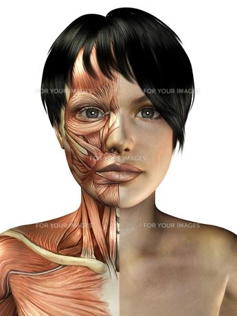 人体イメージの写真素材 [FYI00100012]