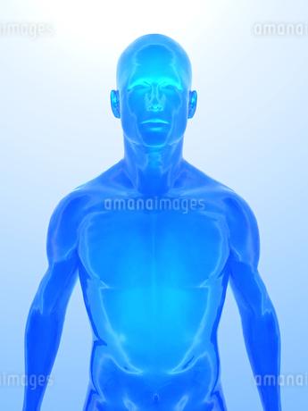 人体イメージのイラスト素材 [FYI00100052]
