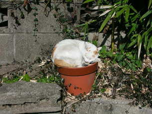 猫が咲いたの写真素材 [FYI00100558]