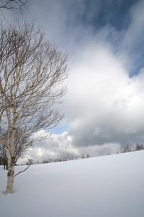 知床の雪原の素材 [FYI00100608]