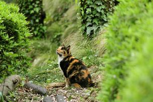 夏待つ猫の写真素材 [FYI00100613]