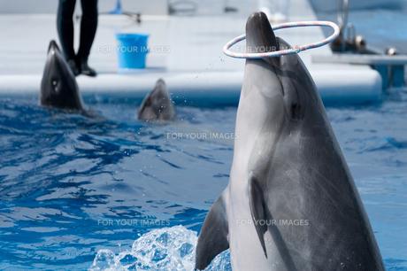 イルカの写真素材 [FYI00100826]