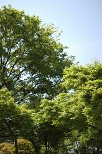 樹木の写真素材 [FYI00100977]