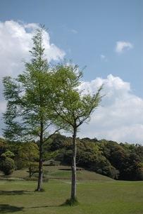 公園の木の写真素材 [FYI00100984]