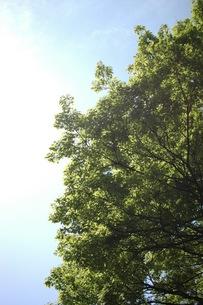 樹木の写真素材 [FYI00100985]