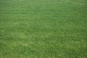 芝生の素材 [FYI00100989]