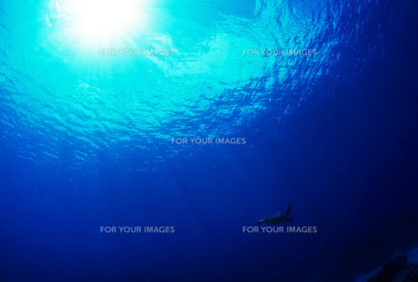 太陽とウミガメの写真素材 [FYI00101135]