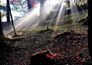 朝日に輝くの写真素材 [FYI00101185]